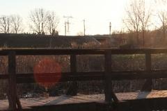 Fruehling_2011_012