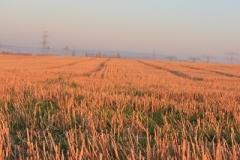 Herbst_2010_010